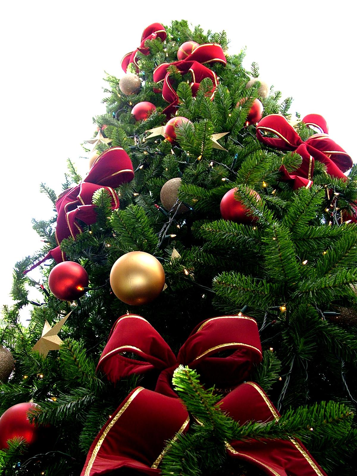ChristmasTree141123-01