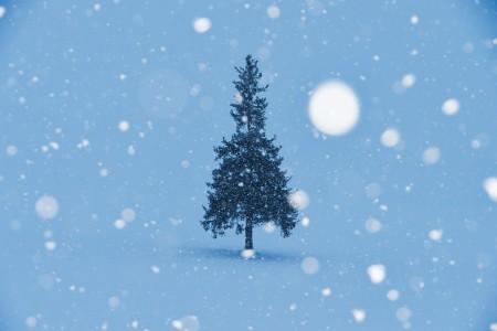 """ホワイトクリスマスが必ず実現できる!""""インスタントスノー""""って知っている?"""