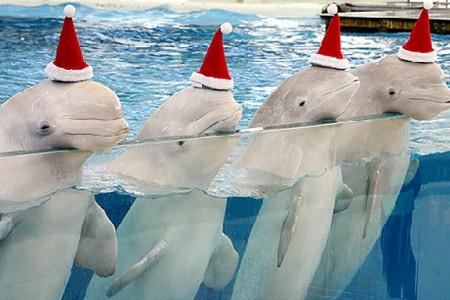 可愛い動物がさらに可愛く♡アニマル×クリスマス画像