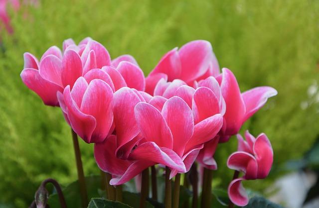flowers-2685687_640