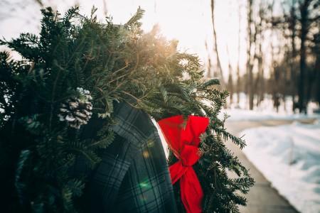 クリスマス時期の植物が知りたい!飾りにもなる花や木の名前や種類